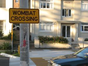 Wombat an der Warner's Avenue © J. Jungehülsing